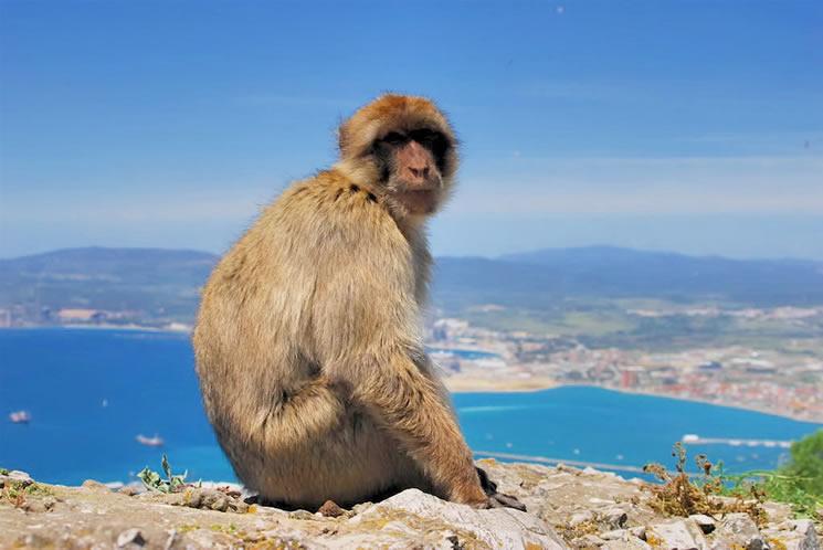 "Opice na Gibraltaru - ""planeta opic"" na konci Evropy"