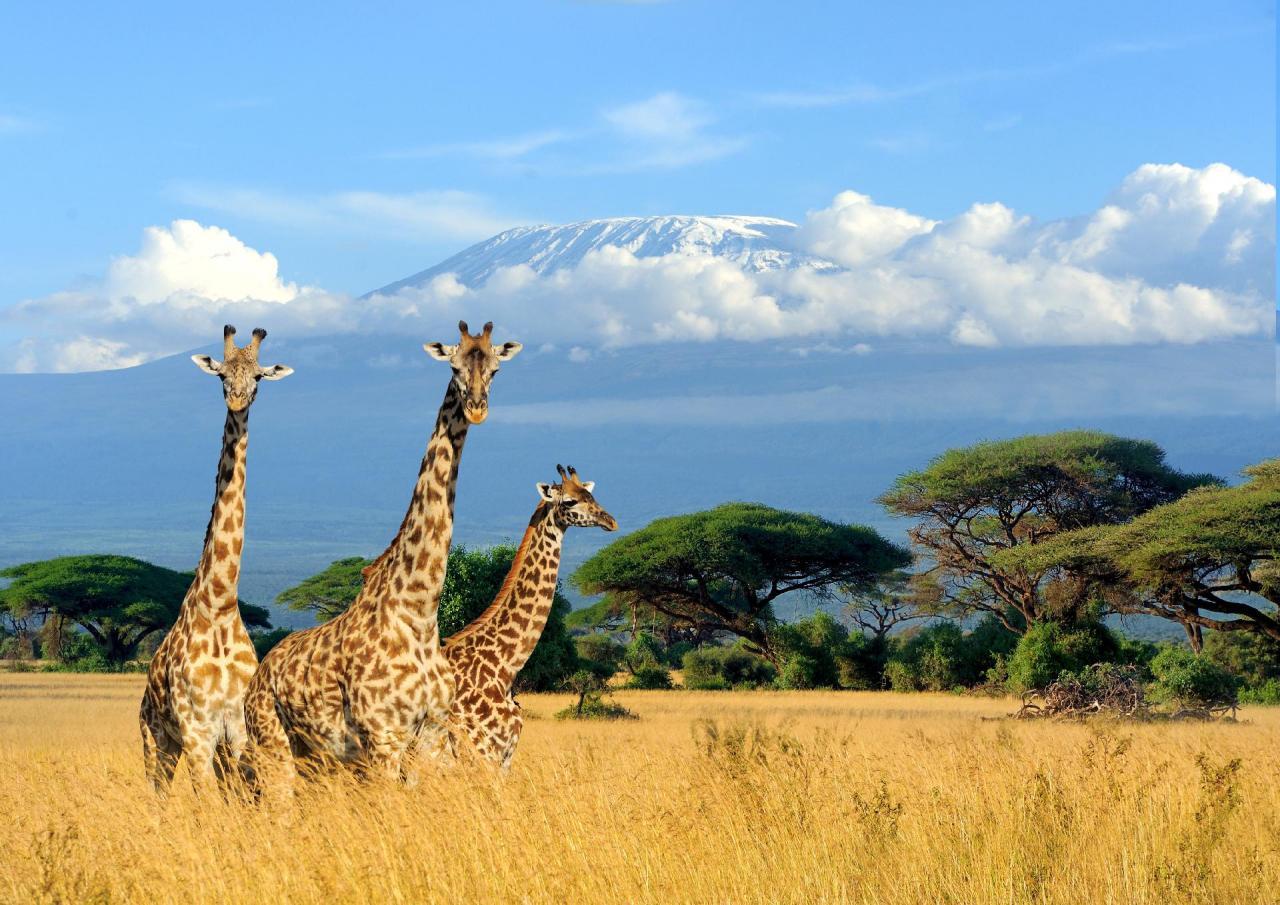 Očkování před cestou do Keni - zdravotní rizika, povinná a doporučená očkování