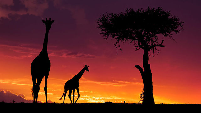 Očkování před cestou do Afriky