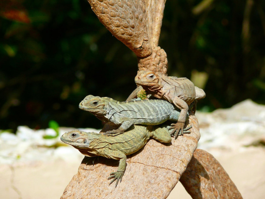 Dominikánská republika – odpočinková dovolená v Karibiku