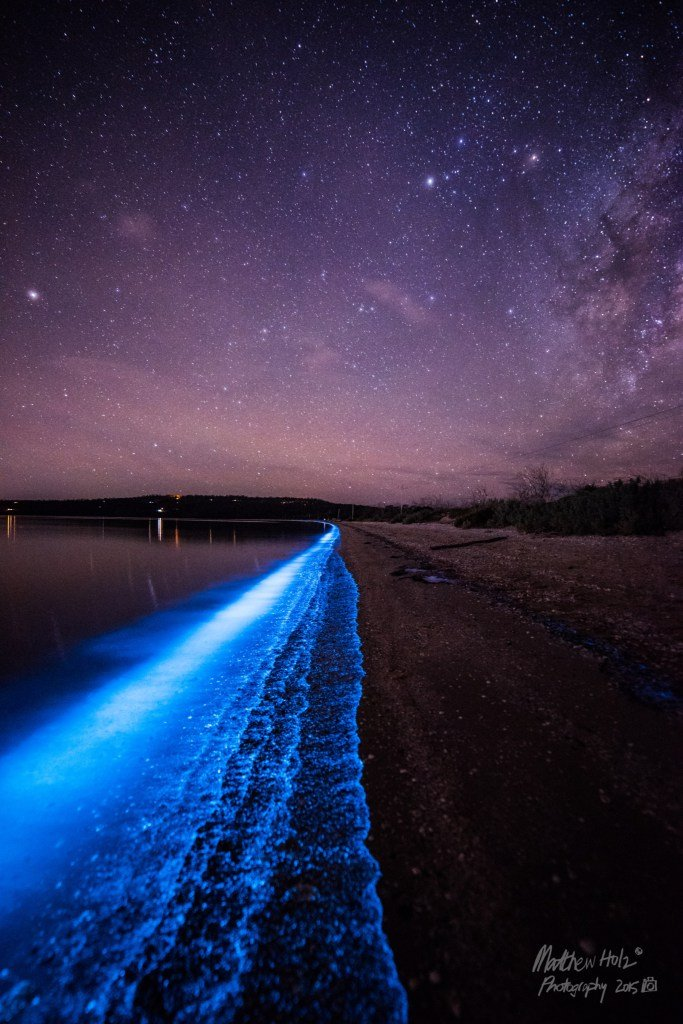 Bioluminiscenční South arm, foto: Matthew Holz