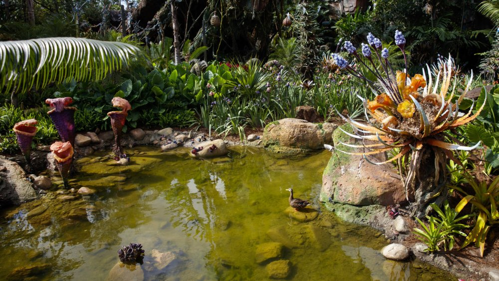 Příroda na Pandoře, foto: Jay L. Clendenin